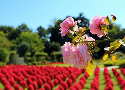定番から穴場まで魅力あふれる千葉県をご紹介!千葉県のラブホテル検索ならカップルズ!